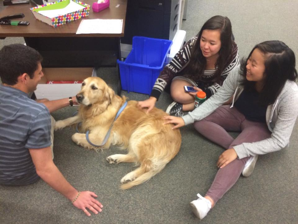 """Several Palo Alto High School faculty members brought """"Therapy Dogs"""" to campus on Tuesday, to help brighten students' spirits following the death by suicide of a Paly student on Monday. Photo by Emma Chiu."""