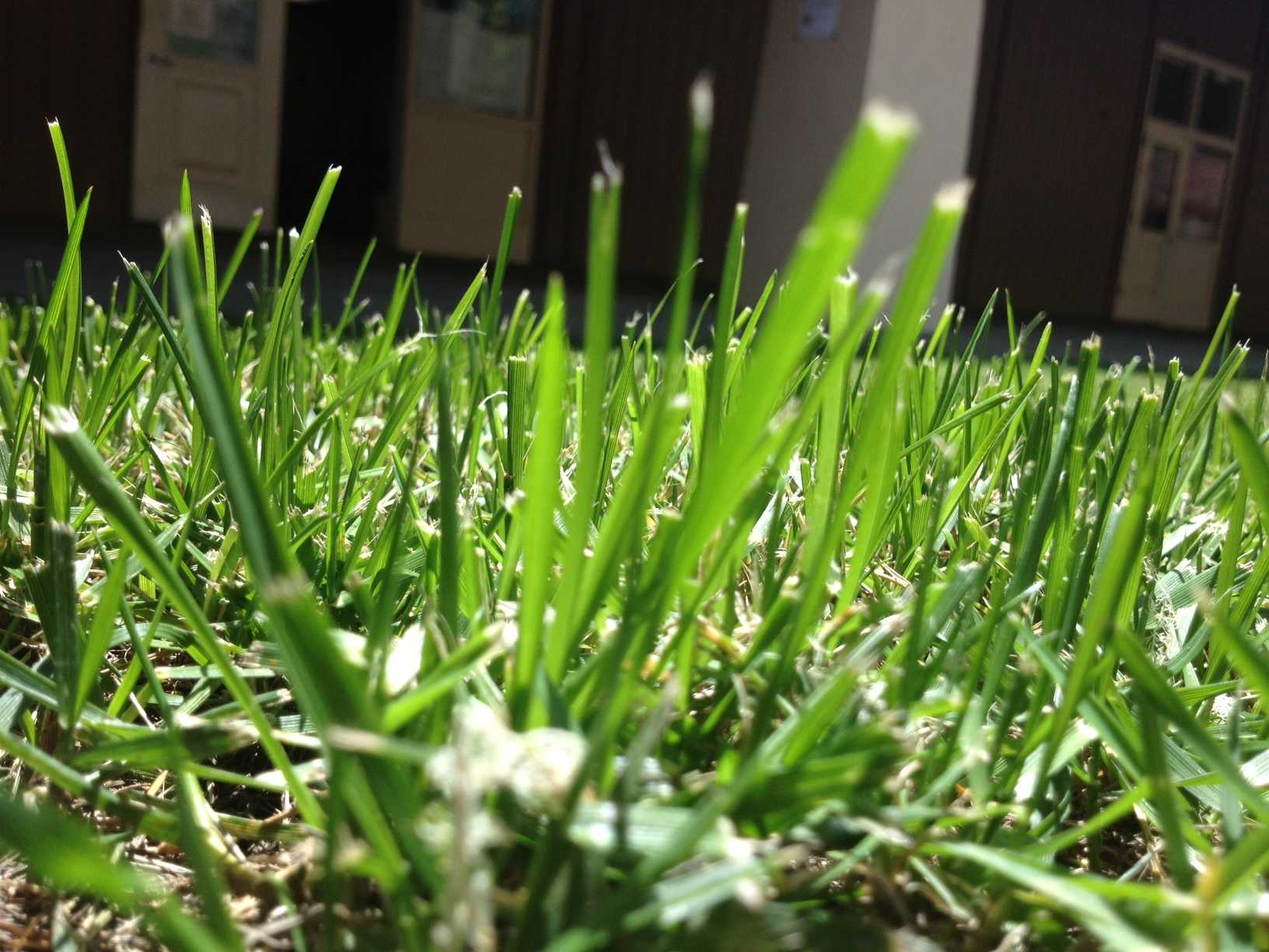Ornamental uses of water such as lawns will be most affected by Palo Alto's water restrictions. These restrictions come in response the California's ongoing drought, with 2014 being the warmest and third driest year on record in California, according to California Water Science Center.