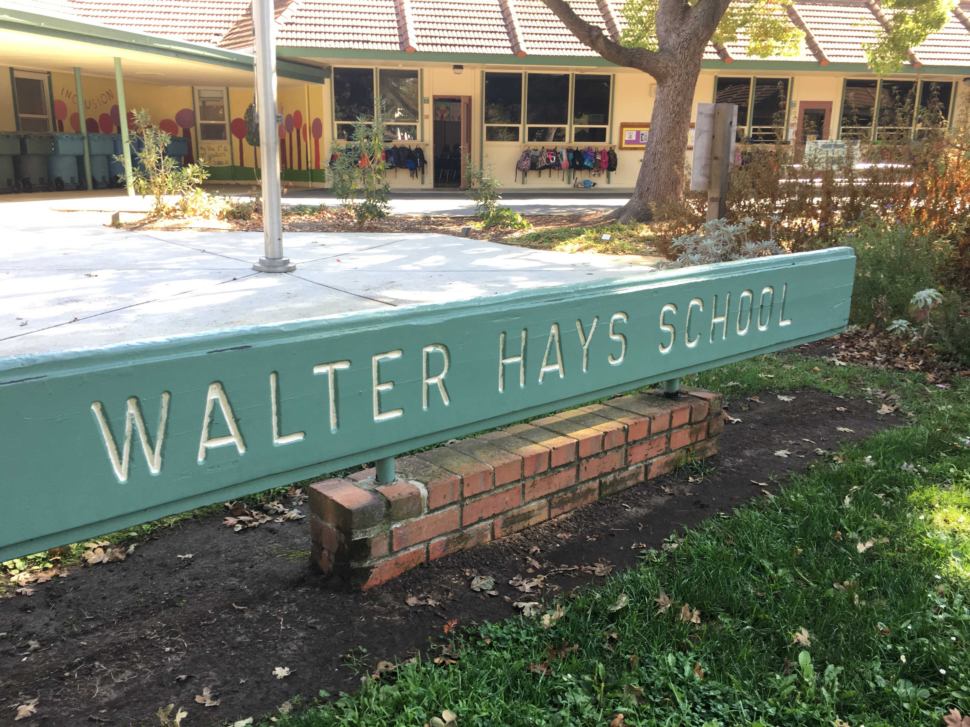 A mountain lion was spotted near Walter Hayes Elementary this morning. Photo: Maya Reuven