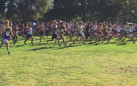 The Paly boy's cross country team race across Toro Park in the CCS meet. Five out of the seven varsity runners placed in the top 50. Photo: Maya Akkaraju