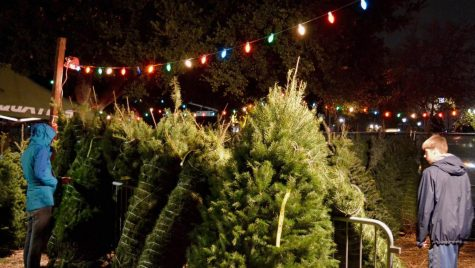 Sports Boosters tree sale in full swing