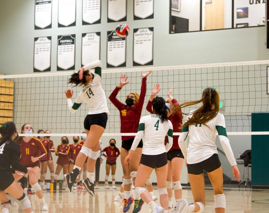 """Freshman Sophie Pan gets ready to spike the ball in the Vikings first home game against the Menlo Atherton Bears last Thursday night. The Vikings swept Menlo Atherton, 3-0, in a one-sided game. Head coach Chris Crader said the impact of the team's cohesiveness during the match will help set them up for a successful season. """"We have fantastic leadership, and I think that chemistry and team dynamics are going to be a strength for us,"""" Crader said. (Photo: Jonathan Chen)"""